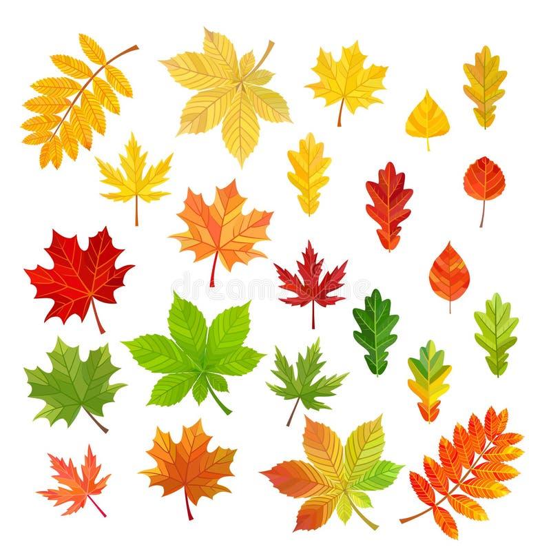 Satz Herbstlaub lokalisiert auf weißem Hintergrund Auch im corel abgehobenen Betrag lizenzfreie abbildung