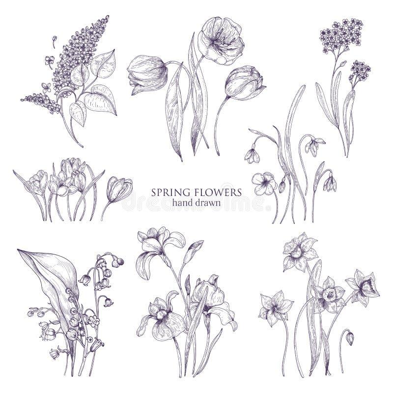 Satz herrliche botanische Zeichnungen des Frühlinges blüht - Tulpe, Flieder, Narzisse, Vergissmeinnicht, Krokus, Lilie von lizenzfreie abbildung
