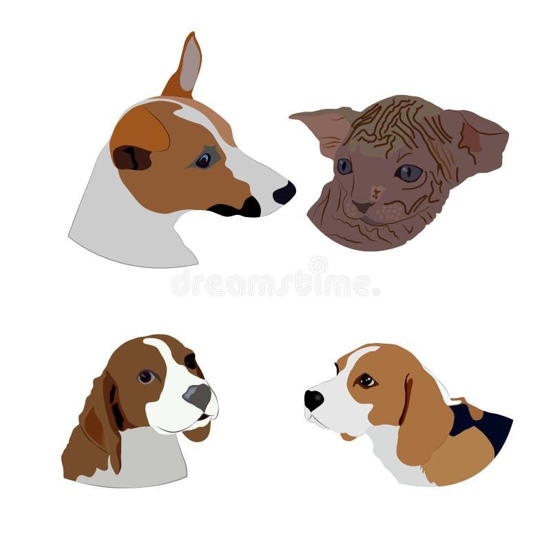 Satz Karikaturköpfe von Hunden und von Katzen auf weißem Hintergrund stockfotos