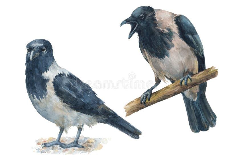 Satz Krähen mit verschiedenen Gefühlen Verärgerter, schreiender Vogel und Ruhe, ruhige Vögel stock abbildung