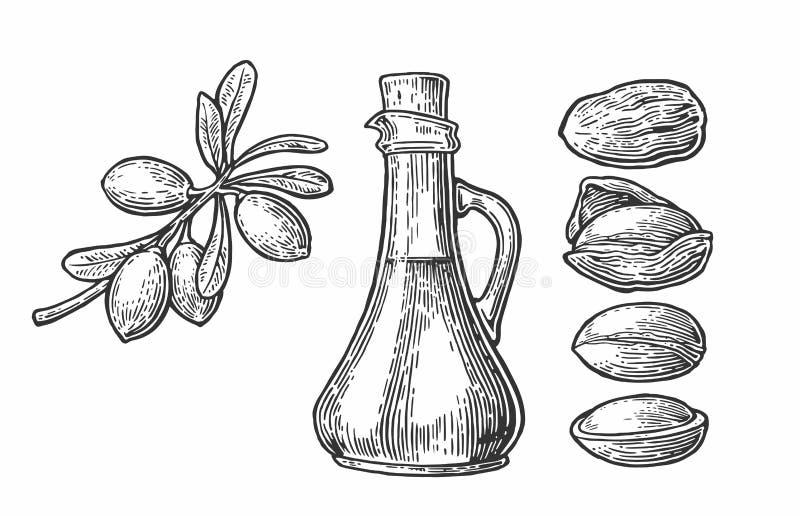 Satz lokalisierte Arganniederlassungen, Blätter, Nüsse Für das Verpacken sahnt Öl Vector die Weinlese gravierte Illustration, die vektor abbildung
