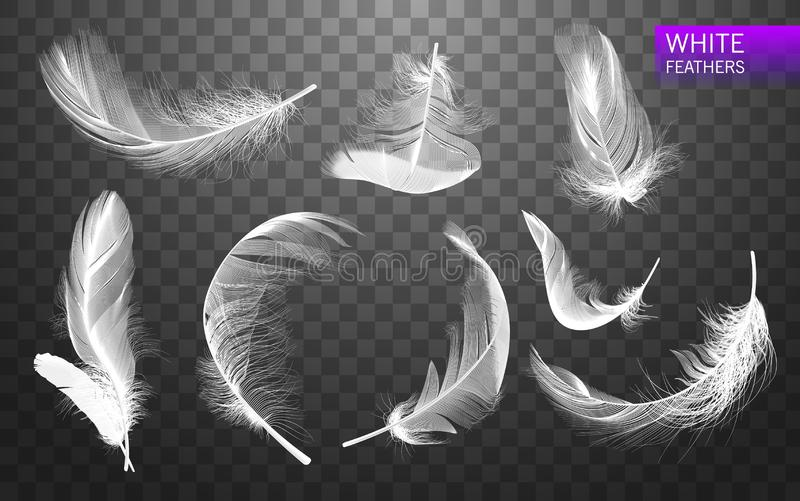 Satz lokalisierte fallende weiße flaumige gewirbelte Federn auf transparentem Hintergrund in der realistischen Art Auch im corel  vektor abbildung