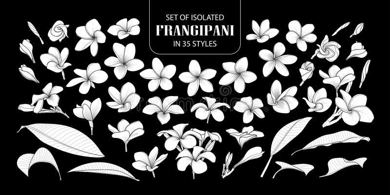 Satz lokalisierten weißen Schattenbild Frangipani stock abbildung