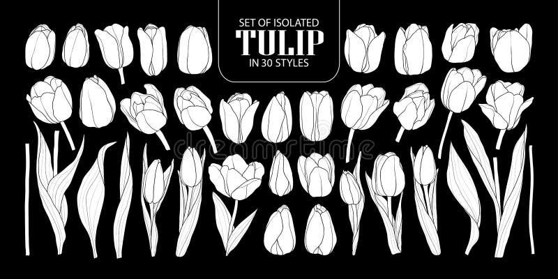Satz lokalisierter weißer Schattenbild Tulpe in 30 Arten Nette Hand d lizenzfreie abbildung