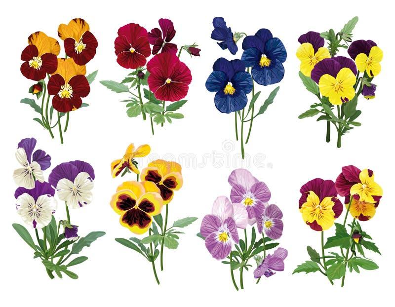 Satz mehrfarbige Pansies stock abbildung