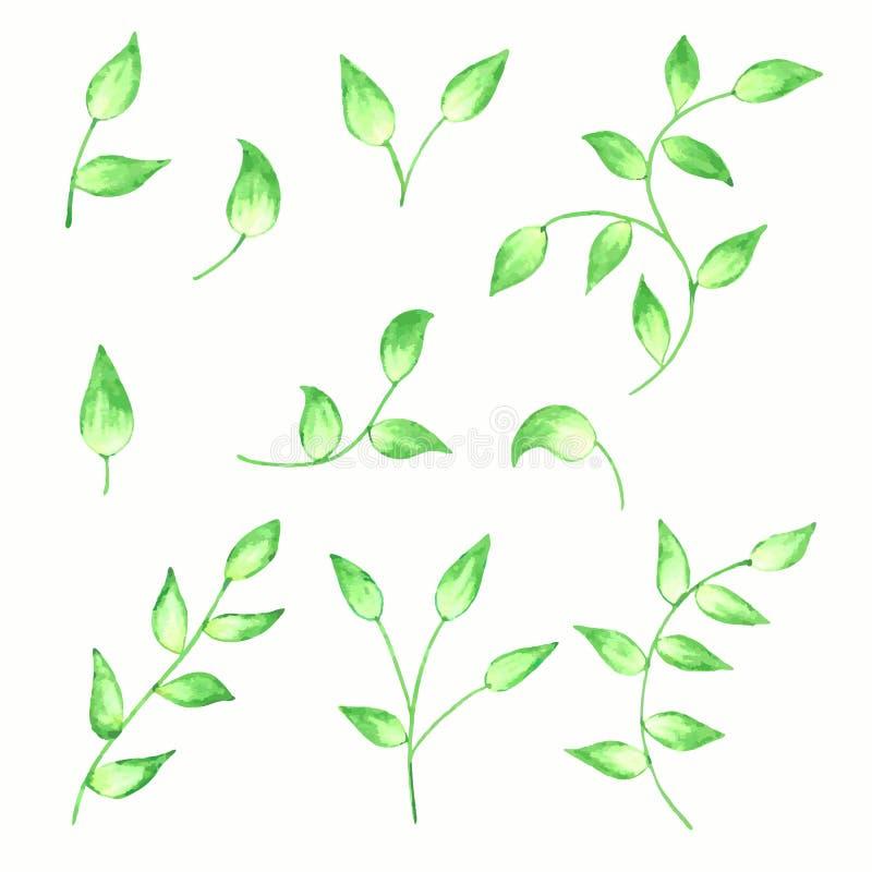 Satz Niederlassungen und Blätter auf Aquarellart, Florenelemente für Ihr Design vektor abbildung