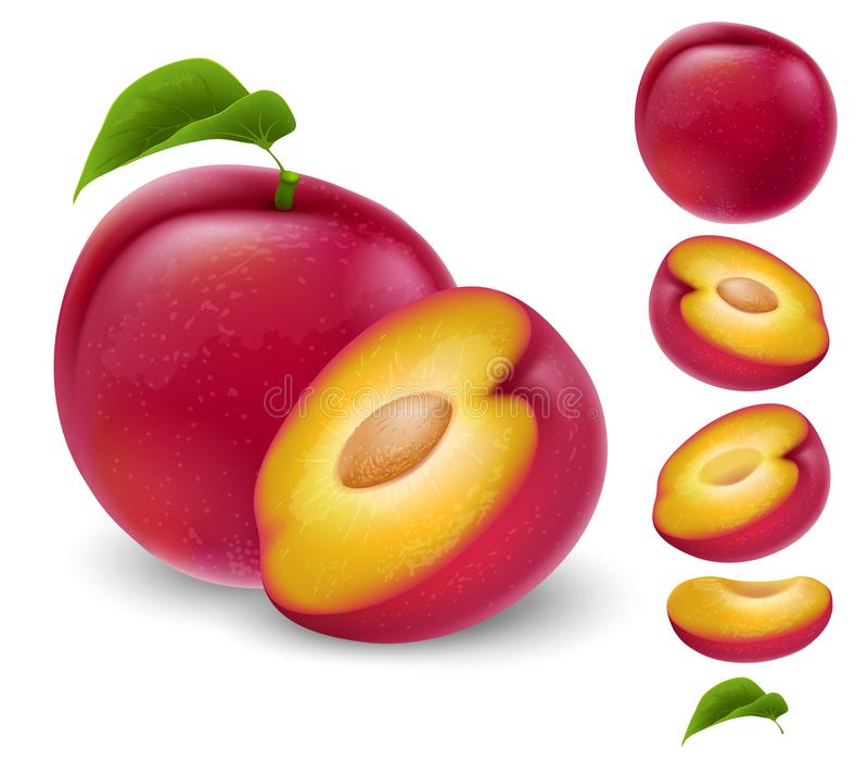 Satz Pflaumenfrucht vektor abbildung