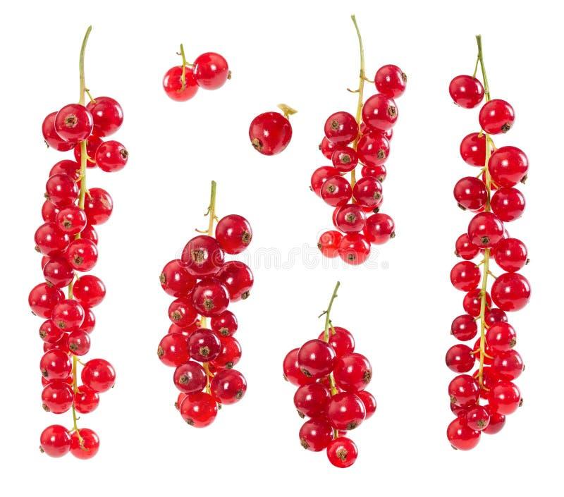 Download Satz rote Johannisbeeren stockbild. Bild von nahaufnahme - 90225241
