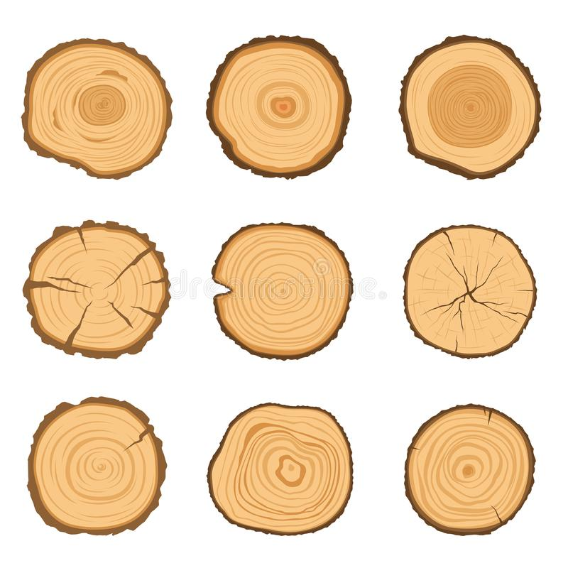 Satz runde Querschnitte eines Baums mit einem anderen Ringmuster lokalisiert auf einem weißen Hintergrund Auch im corel abgehoben vektor abbildung