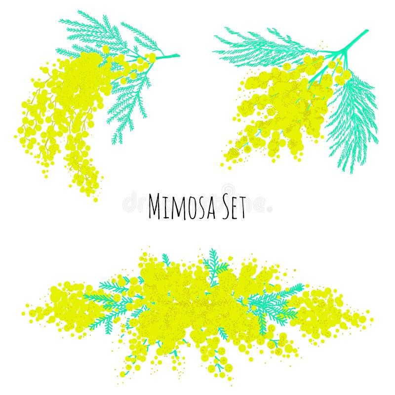 Satz schöne gelbe Mimosenblumen oder -blütenstände und Blätter lokalisiert auf weißem Hintergrund Elegante Blumendekorationen Vec lizenzfreie abbildung