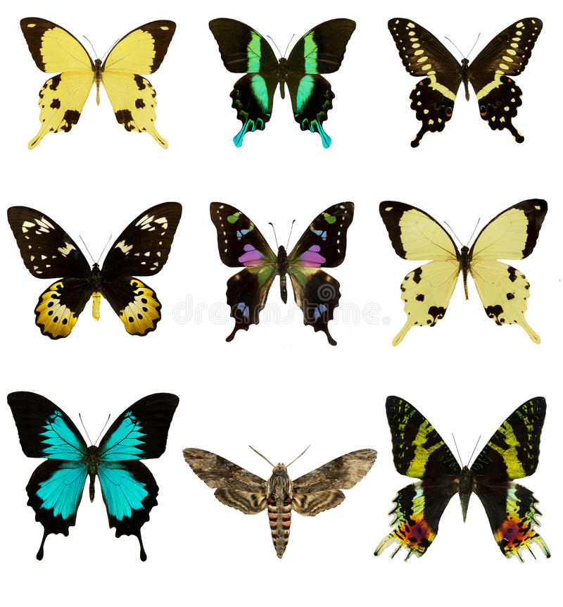 Satz schöne Schmetterlinge stockbild