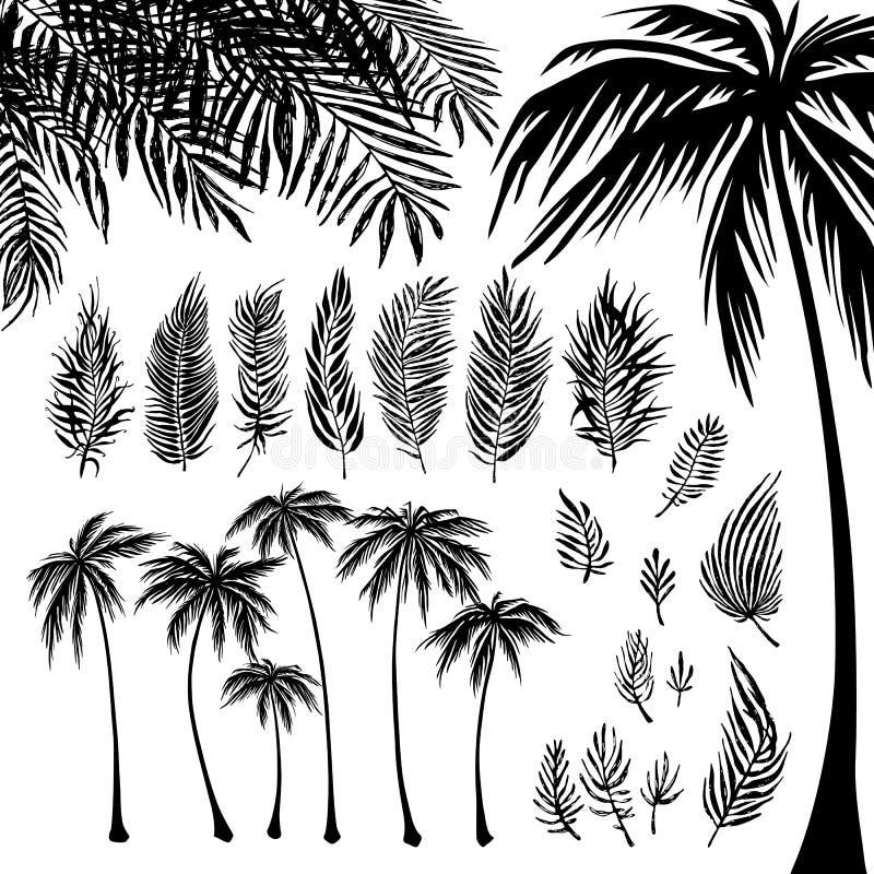 Satz schwarzes Palmeschattenbild und -niederlassungen auf einem weißen Hintergrund Vektorillustration, Gestaltungselement für stock abbildung