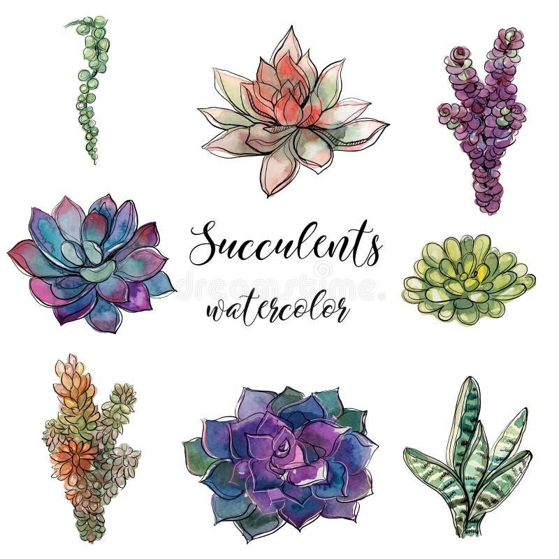 Satz Succulents watercolor graphiken Lokalisierte Gegenstände Vektorillustration vektor abbildung