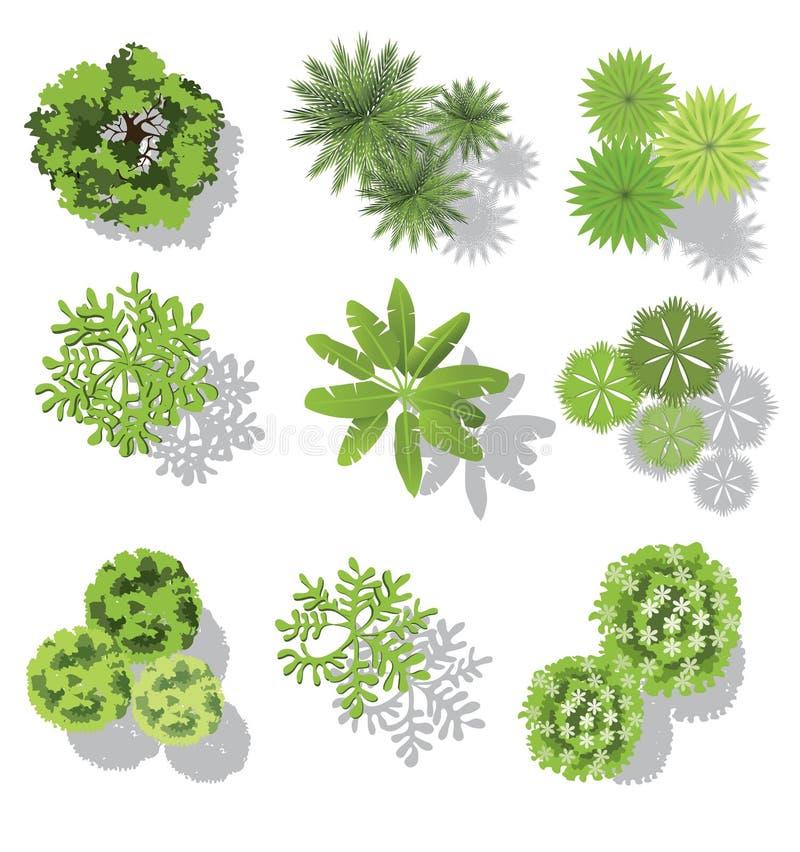 Satz Treetopsymbole, für Architektur- oder Landschaftsdesign vektor abbildung