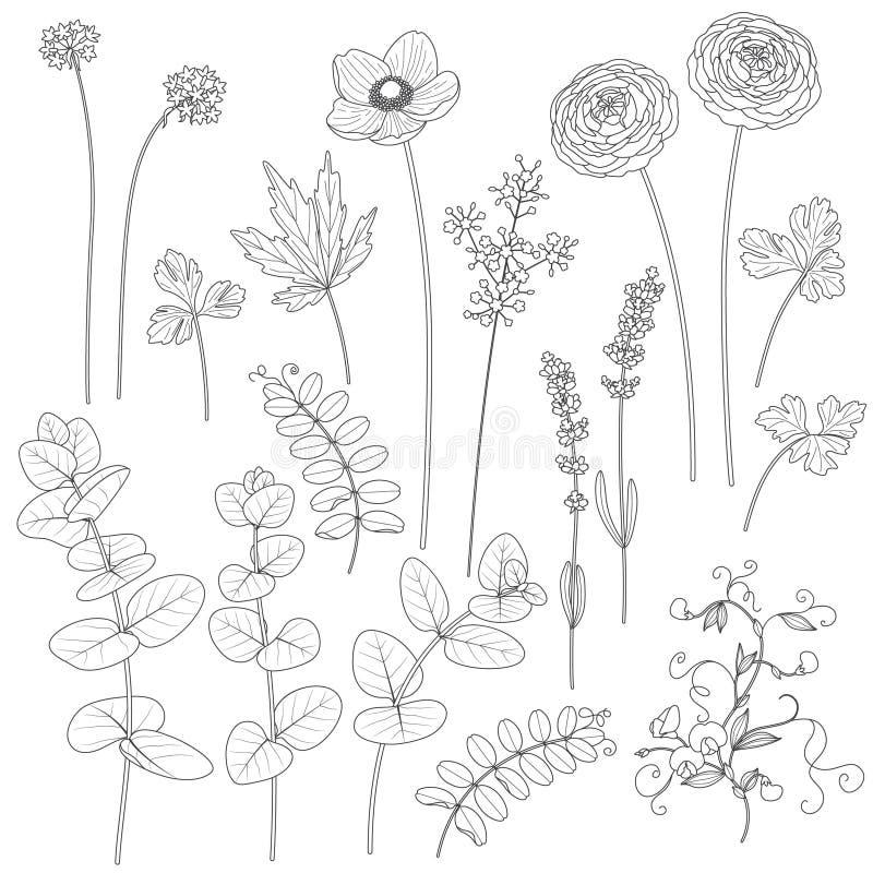 Satz Umrissene Blumen Und Blätter Vektor Abbildung - Illustration ...