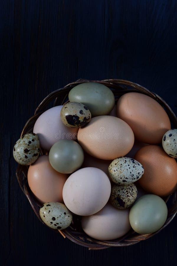 Satz verschiedene Arten Vögel ärgert vom Huhn, vom Fasan und von den Wachteln auf einem dunklen Hintergrund stockfoto