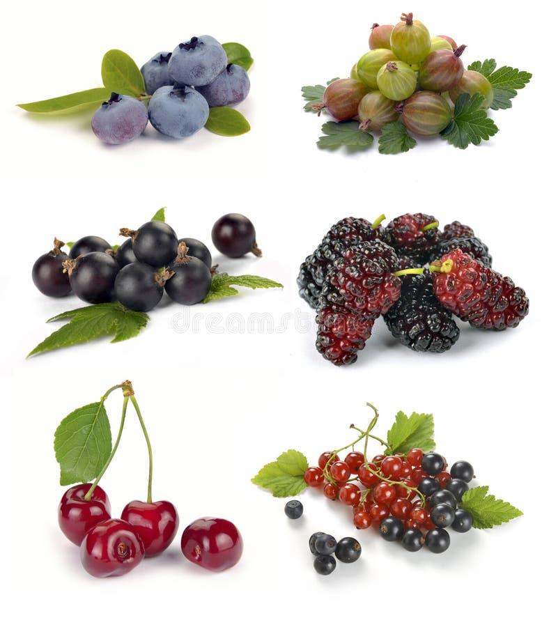 Satz verschiedene Beeren stockbilder