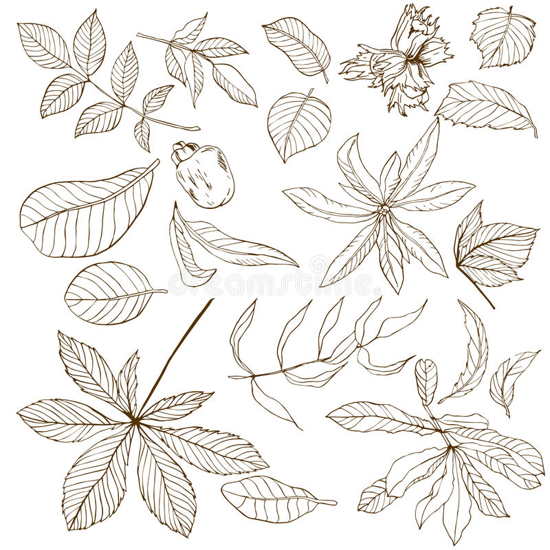 Satz verschiedene nuts Blätter vektor abbildung