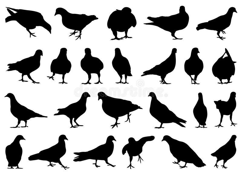 Satz verschiedene Tauben lizenzfreie abbildung