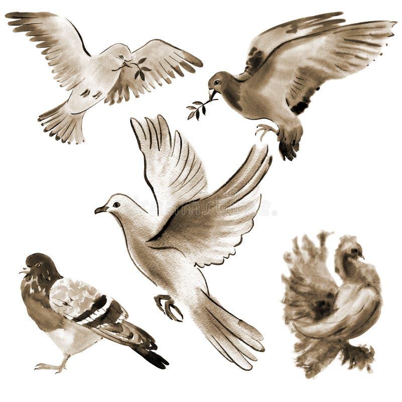 Satz Vogeltauben Aquarellillustration im weißen Hintergrund lizenzfreie abbildung