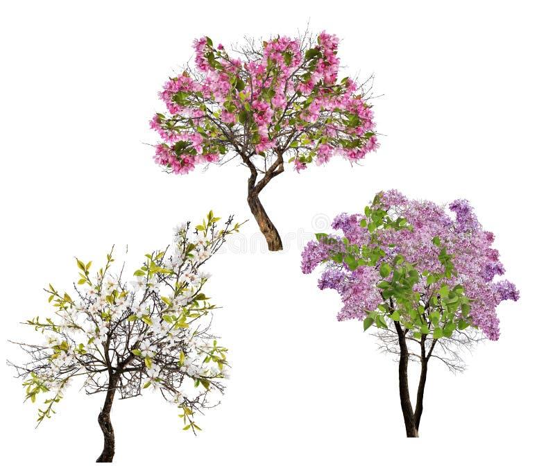 Satz von drei blühenden Bäumen lokalisiert auf Weiß lizenzfreie stockfotos