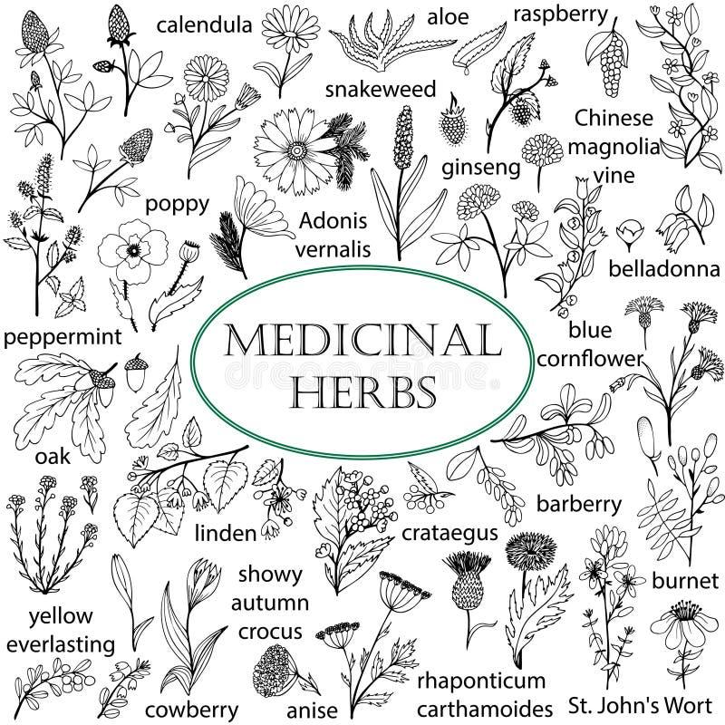 Satz von Hand gezeichnete Illustrationen von medizinischen Kräutern lizenzfreie abbildung