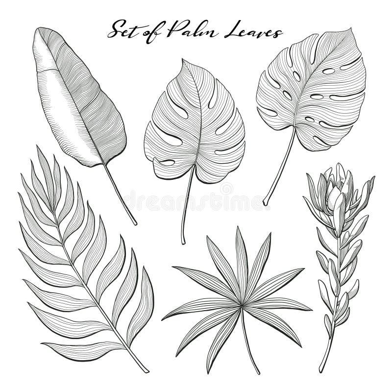 Satz von Hand gezeichneten Palmblättern und von Proteablume stock abbildung