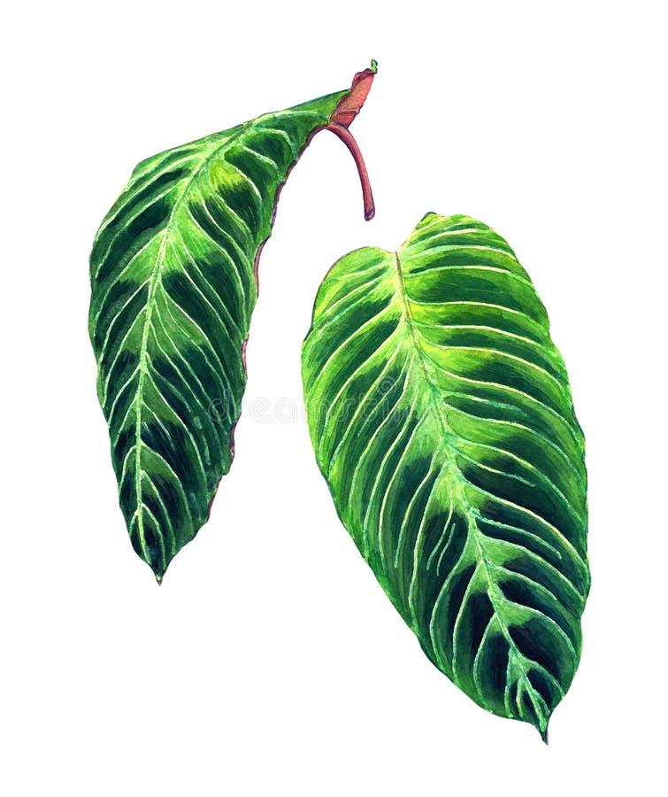 Satz von 2 tropischen Blättern vektor abbildung