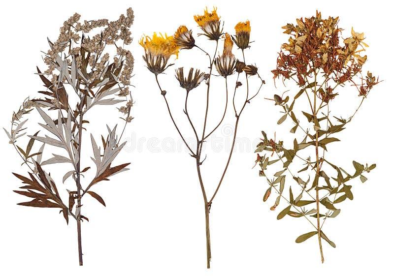 Satz von wildem trocknen gepresste Blumen und Blätter stockfoto
