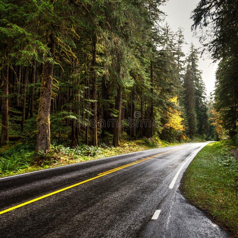 Saubere dunkle Straße nach dem Regen, der rechts durch den Hoh Rain-Wald kurvt stockbild