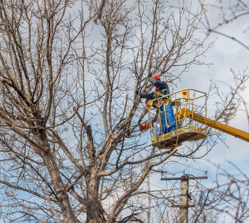 Saubere elektrische Drähte der Elektriker tun Baum stockbild