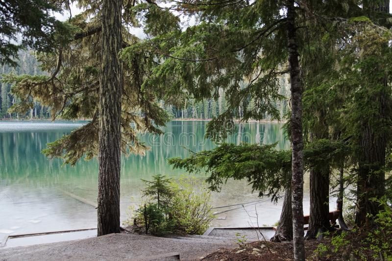 Sauberer Gebirgssee umgeben durch Koniferenwald, lizenzfreies stockfoto
