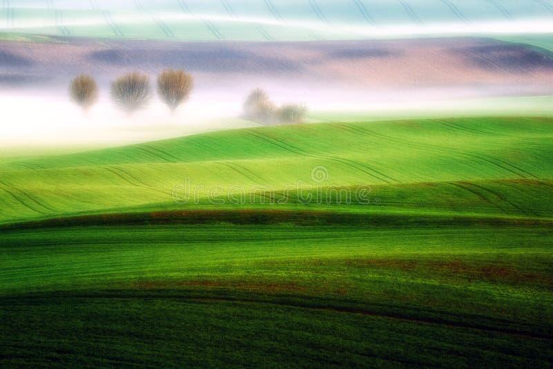 Sauce de la primavera entre las nieblas foto de archivo libre de regalías