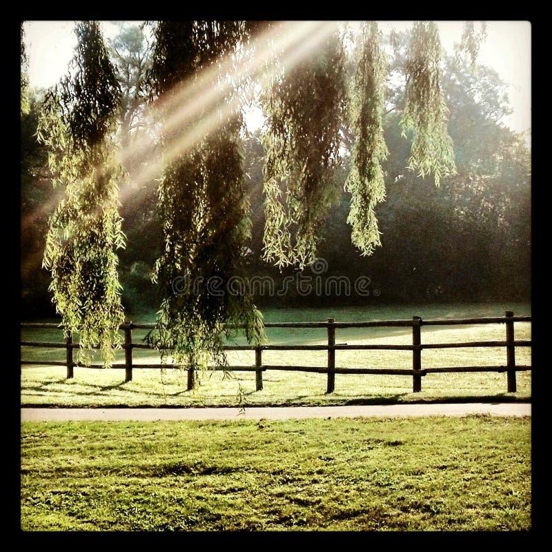 Sauce de madera de la cerca de la primavera de la sol de la naturaleza fotos de archivo libres de regalías