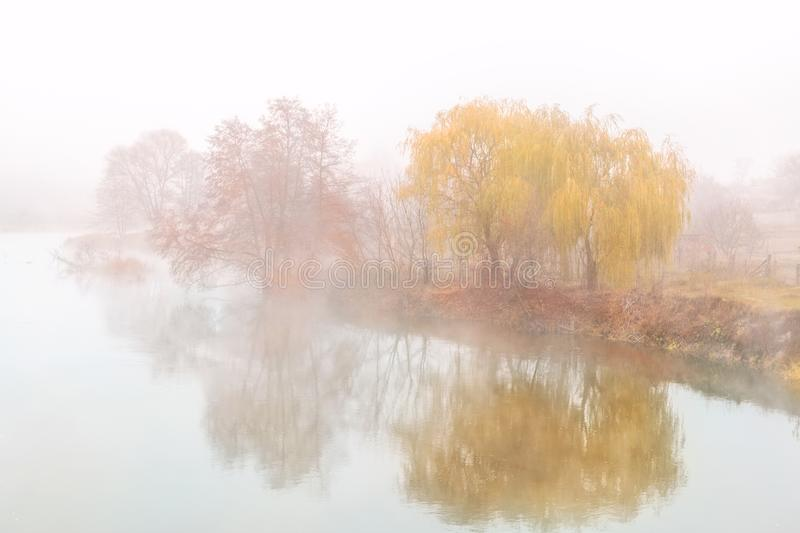 sauce que llora de oro sobre la orilla del río cubierta con niebla pesada gruesa en la mañana temprana del otoño País rural escén fotografía de archivo libre de regalías