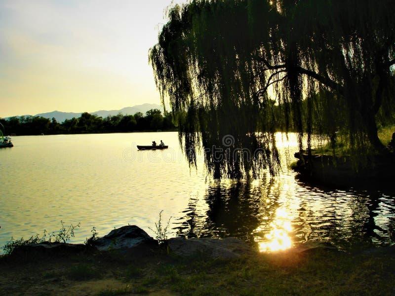 Sauce que llora, luminiscencia, desvanecimiento, lago, barco y atmósfera del cuento de hadas imagen de archivo libre de regalías