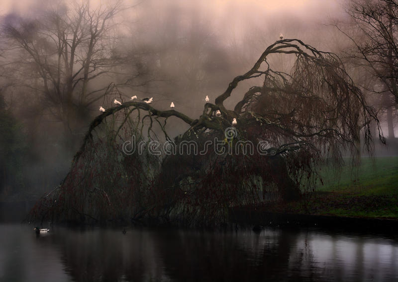 Sauce que llora misterioso en la niebla fotos de archivo