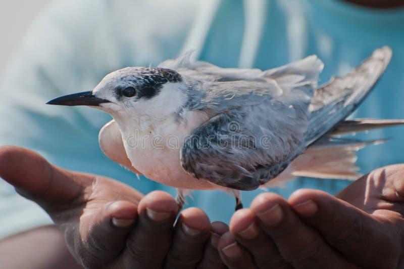 Sauf un oiseau, sauf l'environnement photographie stock
