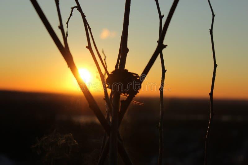 Sauge de coucher du soleil photographie stock libre de droits