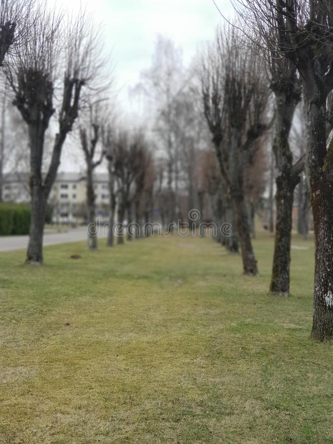 Saulkrasti, Letland, aard, bomen stock afbeeldingen