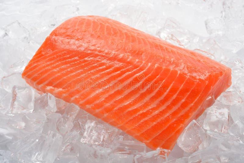 Saumons frais photo libre de droits