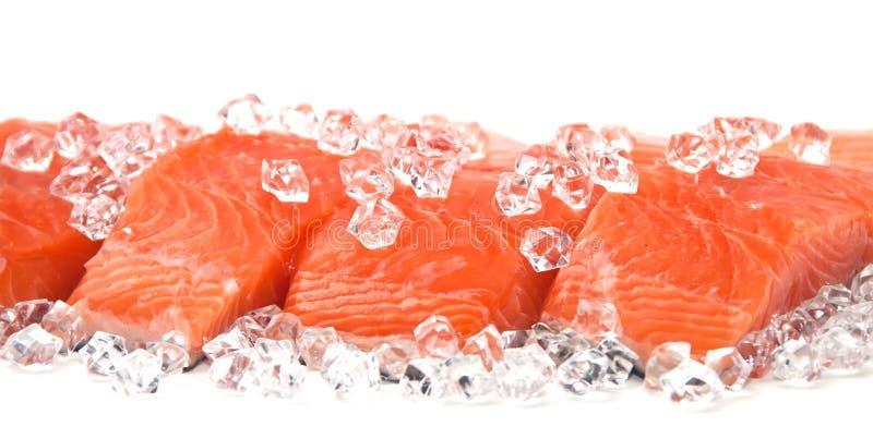 Saumons sur la glace images libres de droits
