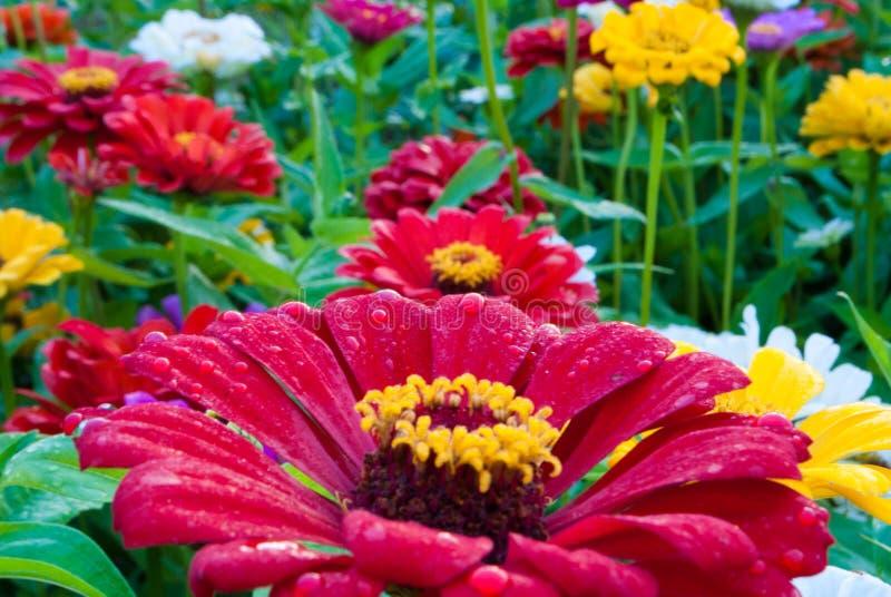 Saupoudrage frais des fleurs de ressort photo stock