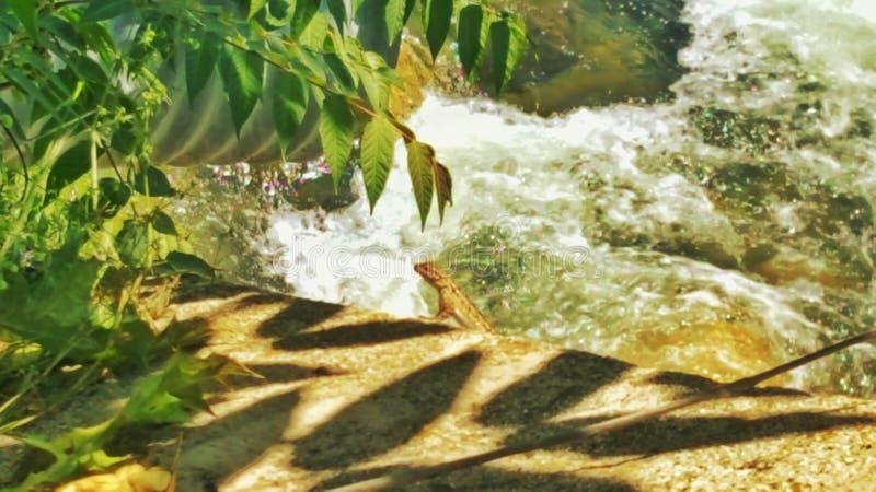 saurian auf einem Stein im Sonnenschein stockfotografie
