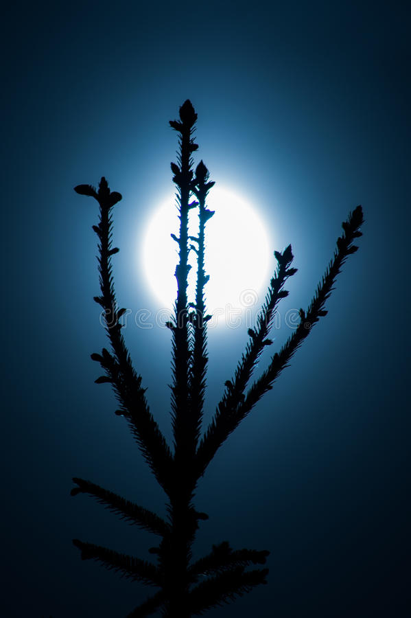 Saurons eye like moon spruce. Spruce tree in front of moon look like saurons eye from Lord Of The Rings stock image