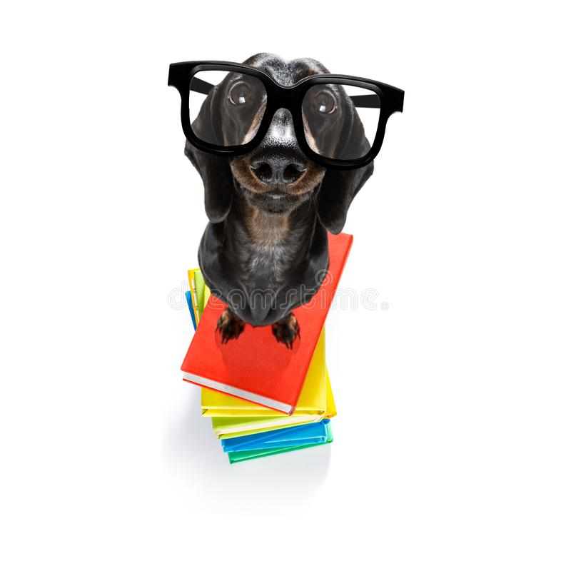 Smart dog and books stock images