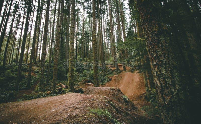 Saut de vélo de montagne dans les bois image libre de droits