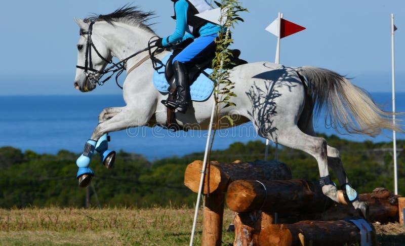 Sauter de cheval de pays croisé photo libre de droits