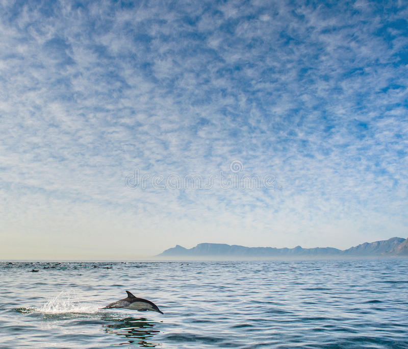 Sauter de dauphin de l'eau photo stock