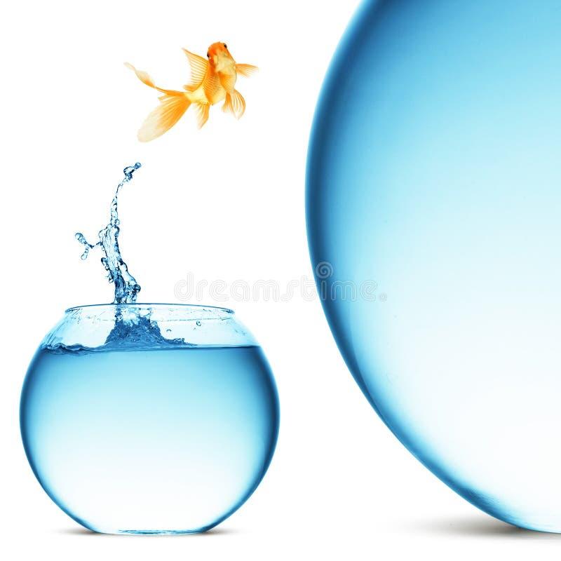 Sauter de Goldfish de l'eau photographie stock libre de droits